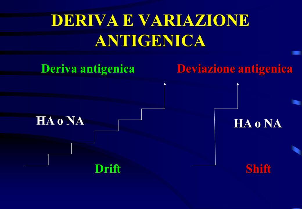 DERIVA E VARIAZIONE ANTIGENICA Deviazione antigenica HA o NA Deriva antigenica DriftShift