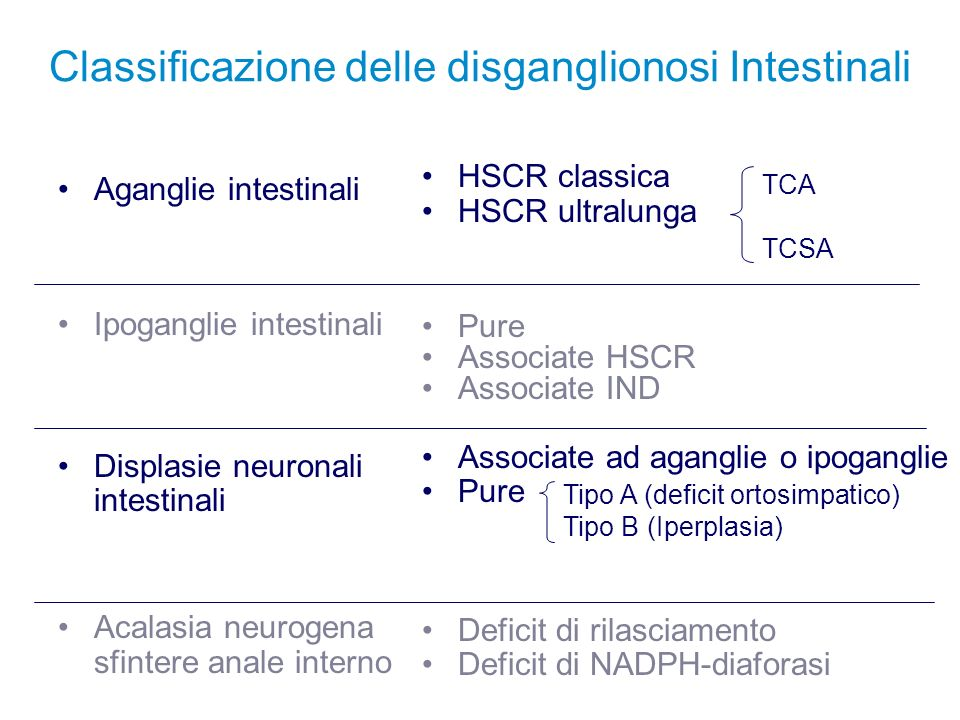 Pattern innervativo intestinale AChE Lamina propria Gangli Mioenterici Musc.