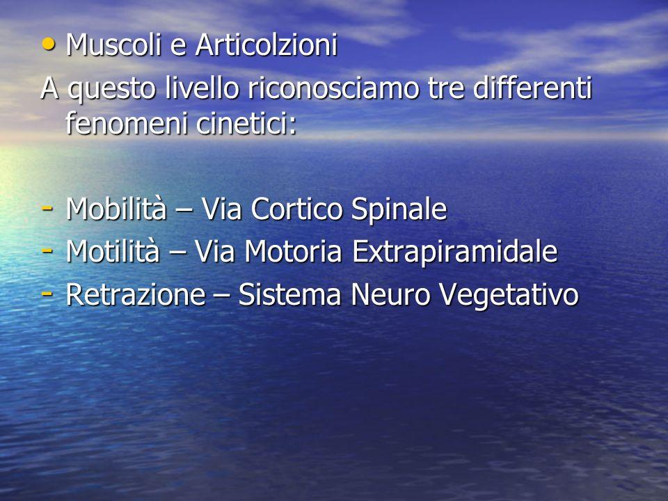Muscoli e Articolzioni Muscoli e Articolzioni A questo livello riconosciamo tre differenti fenomeni cinetici: - Mobilità – Via Cortico Spinale - Motil