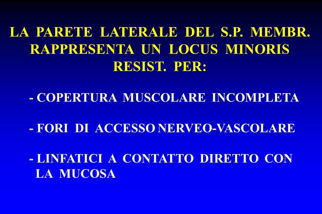 LA PARETE LATERALE DEL S.P. MEMBR. RAPPRESENTA UN LOCUS MINORIS RESIST. PER: - COPERTURA MUSCOLARE INCOMPLETA - FORI DI ACCESSO NERVEO-VASCOLARE - LIN