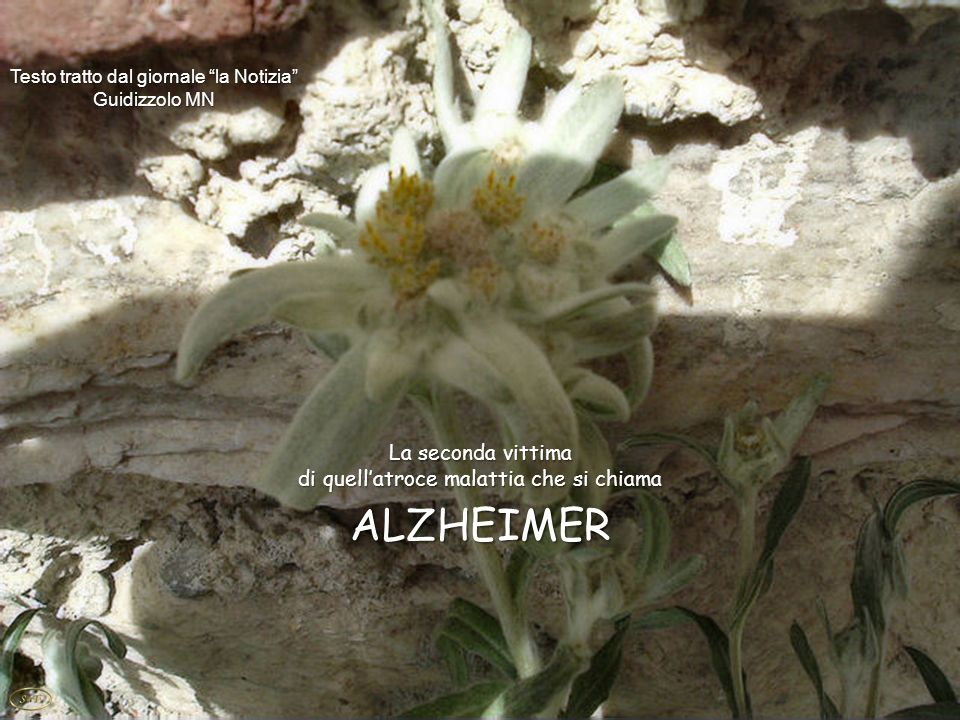 La seconda vittima di quellatroce malattia che si chiama ALZHEIMER Testo tratto dal giornale la Notizia Guidizzolo MN