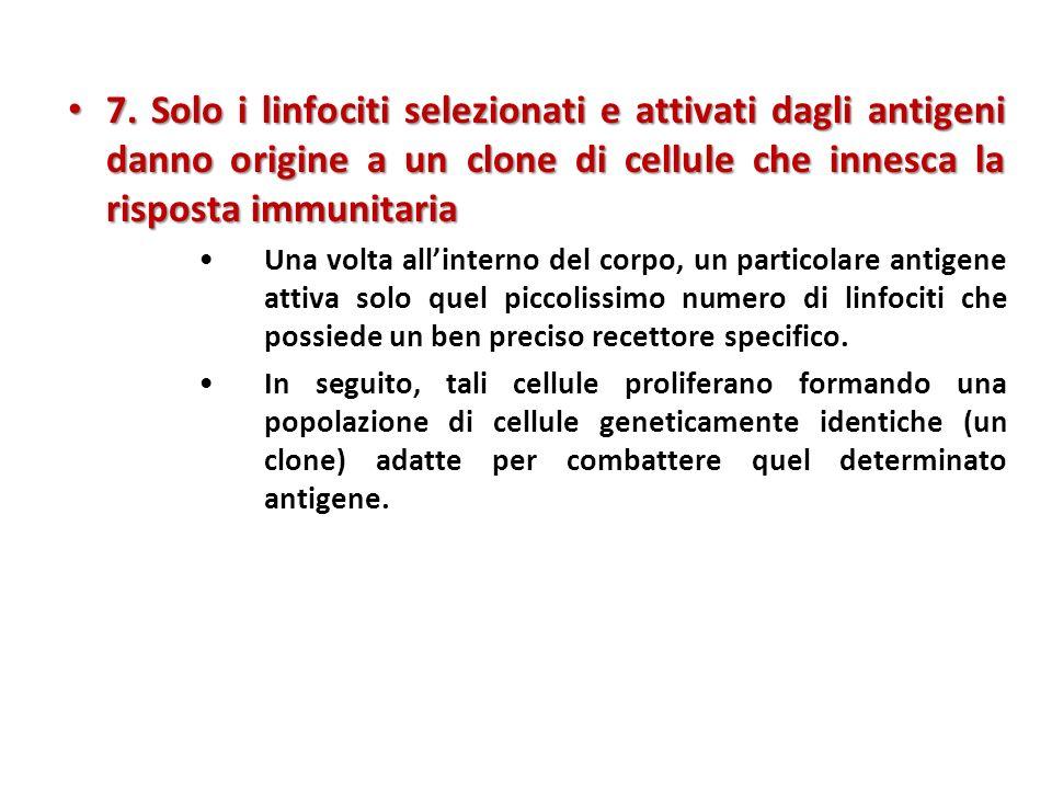 Microbo Macrofago Antigene prodotto dal microbo non self 1 Proteina self (proteina MHC di classe II) 2 3 4 Cellula APC Interleuchina-1 (partecipa allazione del linfocita T helper) Linfocita T helper Interleuchina-2 partecipa allattivazione di altri linfociti T e B Immunità umorale (secrezione di anticorpi da parte delle plasmacellule) Linfocita T citotossico Immunità mediata da cellule (attacca le cellule infette) Sito di legame per lantigene Sito di legame per la proteina self Linfocita B Complesso self-non self Recettore del linfocita T Attivazione di un linfocita T helper e suo ruolo nellimmunità: 1.