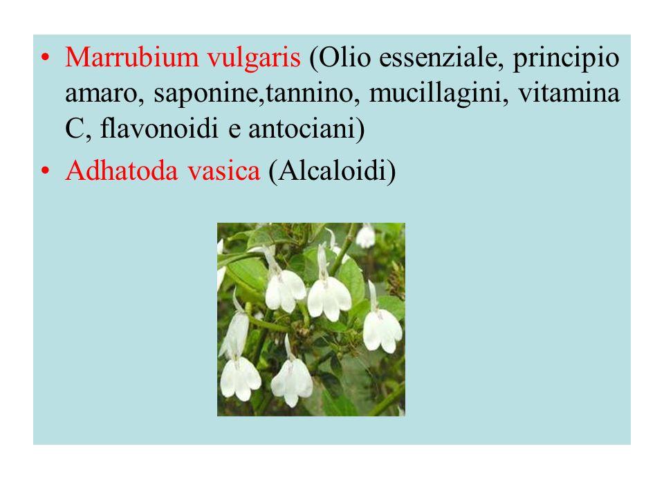 Marrubium vulgaris (Olio essenziale, principio amaro, saponine,tannino, mucillagini, vitamina C, flavonoidi e antociani) Adhatoda vasica (Alcaloidi)