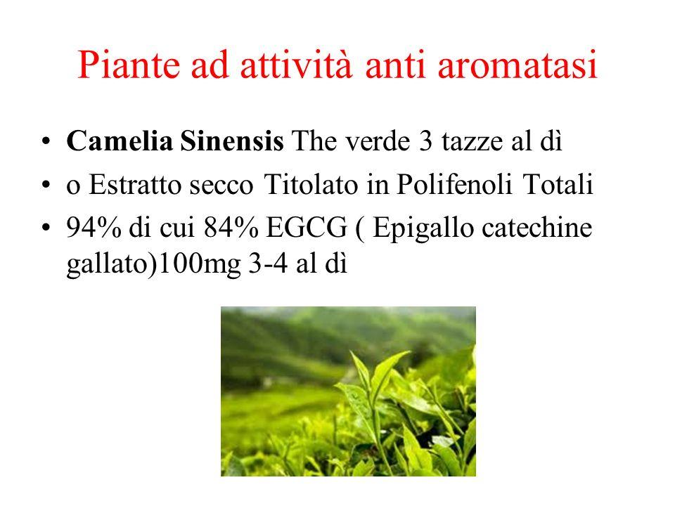 Piante ad attività anti aromatasi Camelia Sinensis The verde 3 tazze al dì o Estratto secco Titolato in Polifenoli Totali 94% di cui 84% EGCG ( Epigal