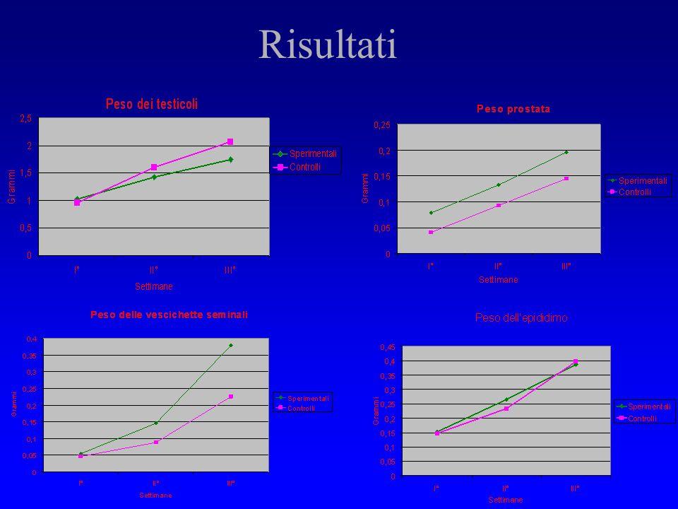 Risultati Aumento del peso e volume dei testicoli (6%) dei ratti S1 vs C1. Rapporto inverso nei ratti della II e III settimana (14% C vs S). Aumento s