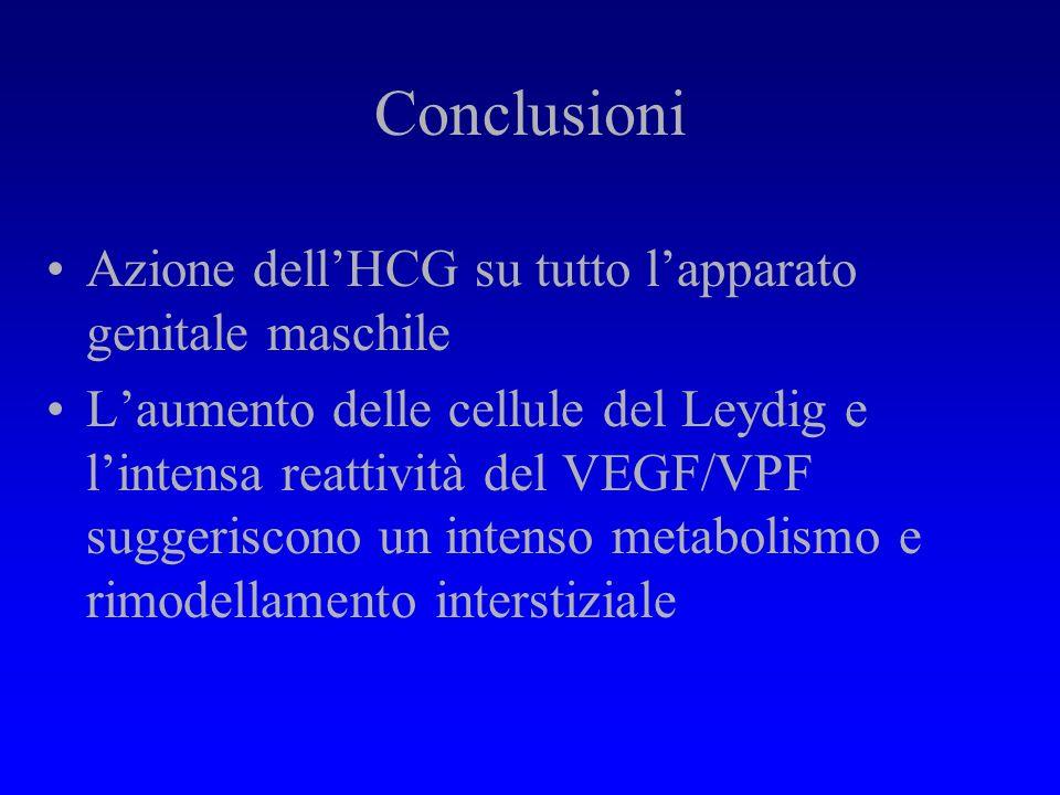 Risultati immuno-istologici : VEGF Intensa reazione intracitoplasmatica cell del Leydig nel gruppo S Reazione della linea germinale primitiva : Sperma