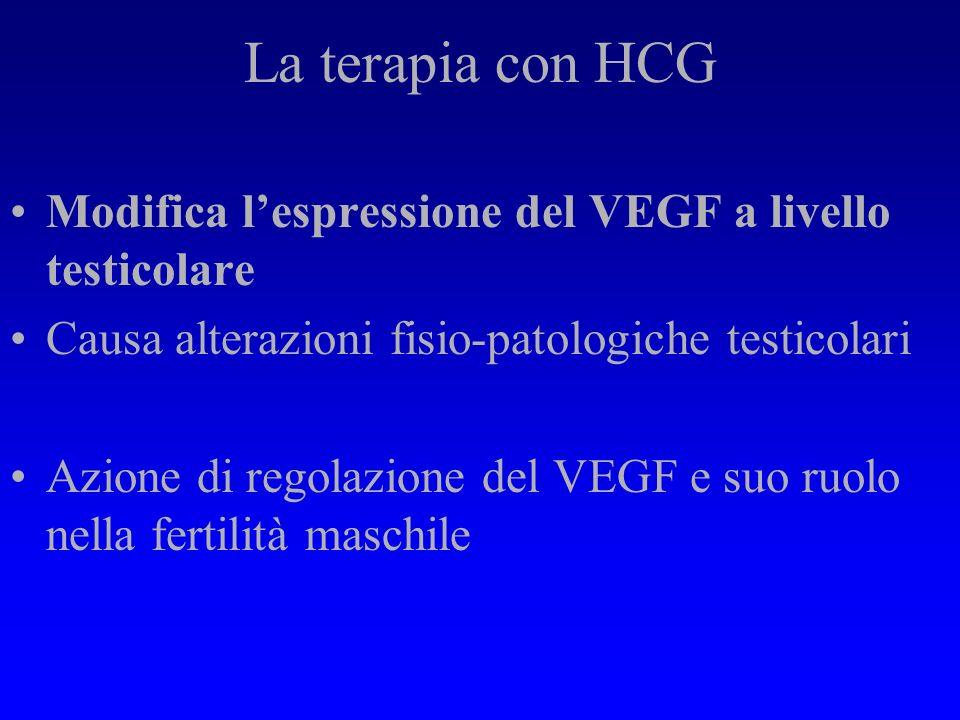 Conclusioni Azione dellHCG su tutto lapparato genitale maschile Laumento delle cellule del Leydig e lintensa reattività del VEGF/VPF suggeriscono un i