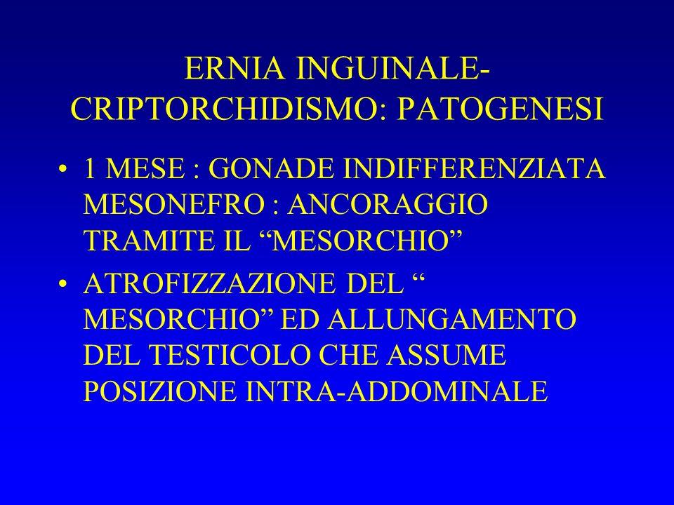 ERNIA INGUINALE- CRIPTORCHIDISMO: PATOGENESI 1 MESE : GONADE INDIFFERENZIATA MESONEFRO : ANCORAGGIO TRAMITE IL MESORCHIO ATROFIZZAZIONE DEL MESORCHIO ED ALLUNGAMENTO DEL TESTICOLO CHE ASSUME POSIZIONE INTRA-ADDOMINALE
