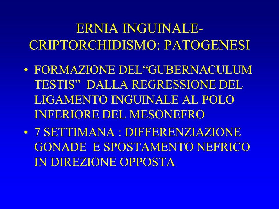 ERNIA INGUINALE- CRIPTORCHIDISMO: PATOGENESI FORMAZIONE DELGUBERNACULUM TESTIS DALLA REGRESSIONE DEL LIGAMENTO INGUINALE AL POLO INFERIORE DEL MESONEFRO 7 SETTIMANA : DIFFERENZIAZIONE GONADE E SPOSTAMENTO NEFRICO IN DIREZIONE OPPOSTA