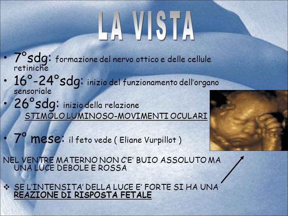 7°sdg: formazione del nervo ottico e delle cellule retiniche 16°-24°sdg: inizio del funzionamento dellorgano sensoriale 26°sdg: inizio della relazione STIMOLO LUMINOSO-MOVIMENTI OCULARI 7° mese: il feto vede ( Eliane Vurpillot ) NEL VENTRE MATERNO NON CE BUIO ASSOLUTO MA UNA LUCE DEBOLE E ROSSA REAZIONE DI RISPOSTA FETALE SE LINTENSITA DELLA LUCE E FORTE SI HA UNA REAZIONE DI RISPOSTA FETALE