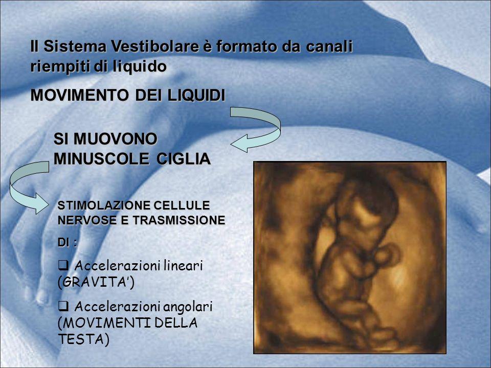 Il Sistema Vestibolare è formato da canali riempiti di liquido MOVIMENTO DEI LIQUIDI SI MUOVONO MINUSCOLE CIGLIA STIMOLAZIONE CELLULE NERVOSE E TRASMI