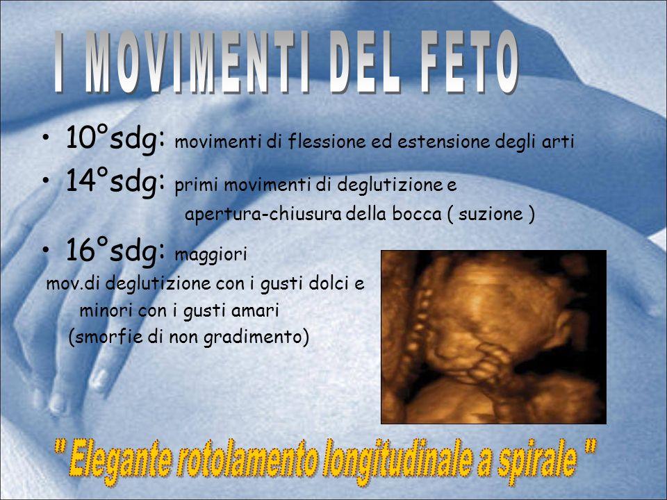 Il feto gioca, tocca ed afferra con mani e piedi tutto ciò che lo circonda ( per es.