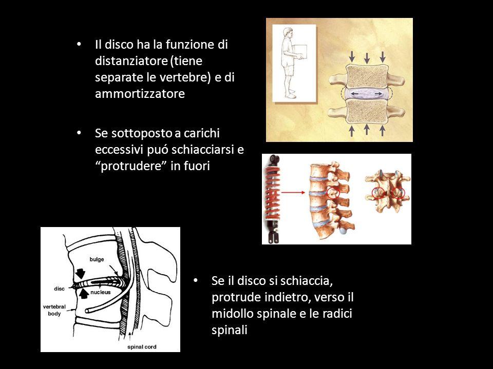 Il disco ha la funzione di distanziatore (tiene separate le vertebre) e di ammortizzatore Se sottoposto a carichi eccessivi puó schiacciarsi e protrudere in fuori Se il disco si schiaccia, protrude indietro, verso il midollo spinale e le radici spinali
