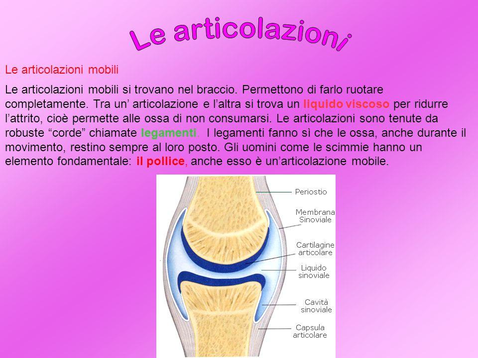 Le articolazioni semimobili Le articolazioni semimobili si trovano nella colonna vertebrale.