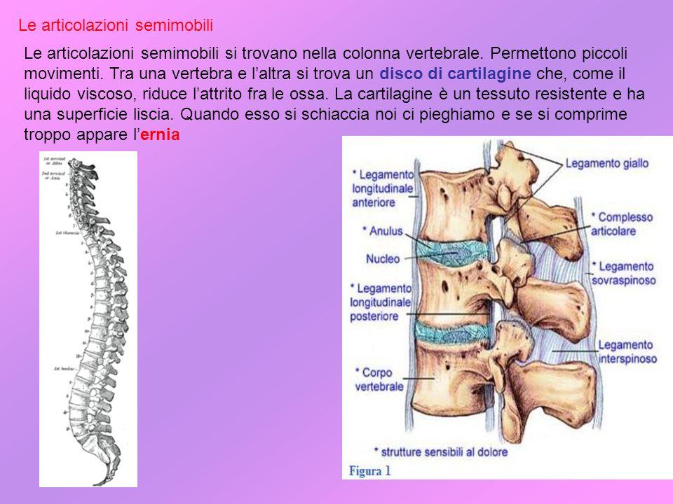 Articolazioni fisse Le articolazioni fisse si trovano nel cranio.