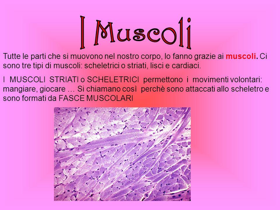 BOCCA FARINGE Laringe Trachea Bronchi Polmoni Esofago Stomaco Intestino ARIA CIBO EPIGLOTTIDE
