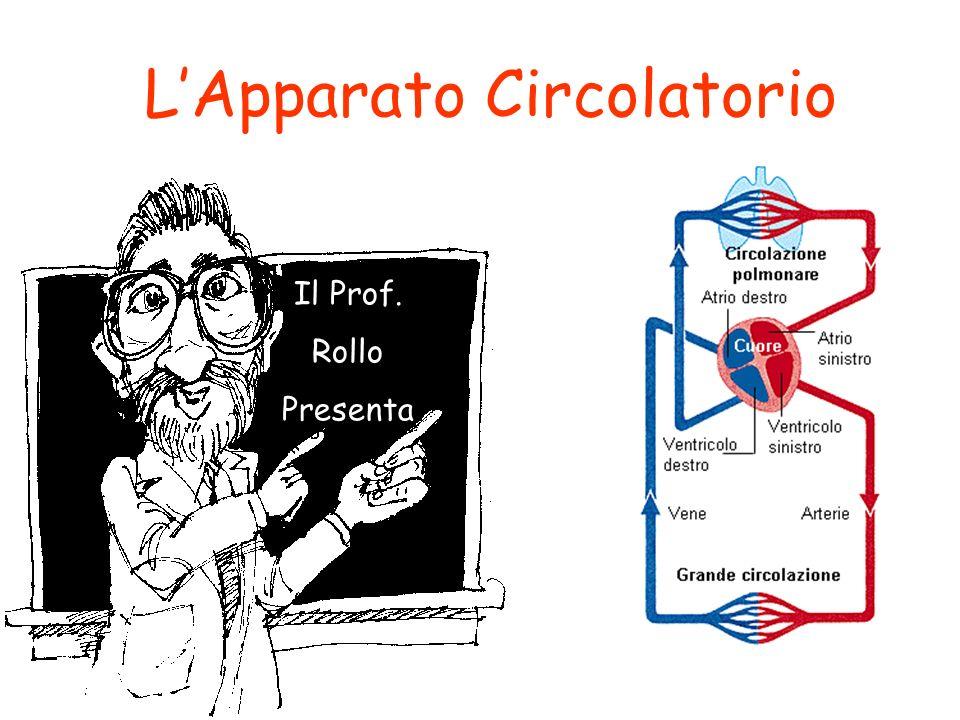 Il Prof. Rollo Presenta LApparato Circolatorio