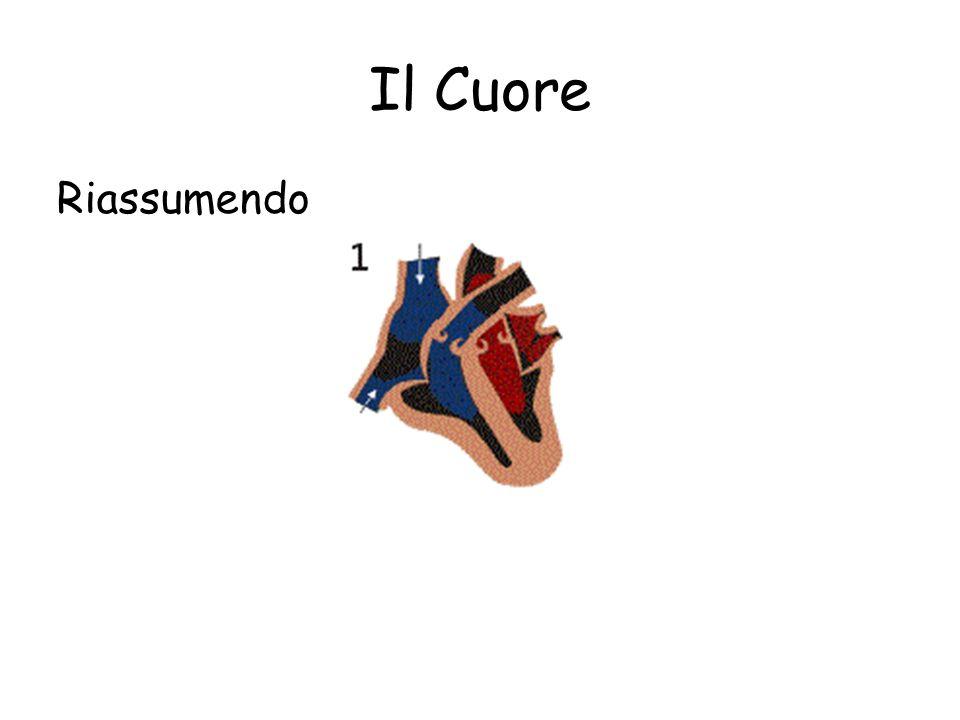 Il Cuore Nella sistole, i ventricoli contraendosi, spingono il sangue nelle arterie aorta e polmonare.