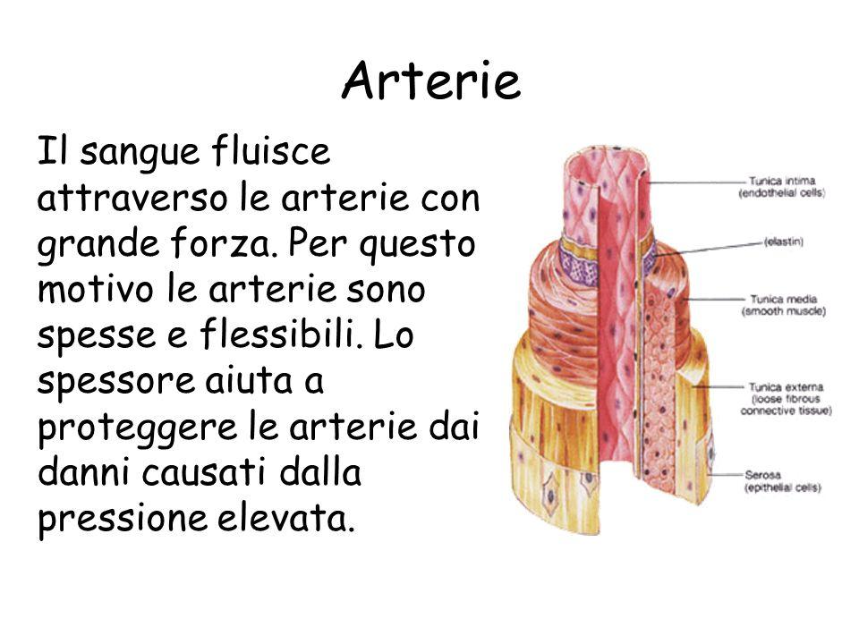Arterie Le arterie trasportano il sangue che esce dal cuore. Ad eccezione del sangue che scorre nellarteria polmonare, il sangue arterioso è ricco di