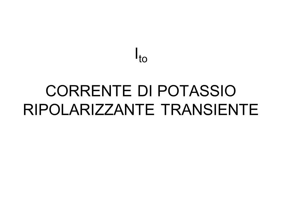 I to CORRENTE DI POTASSIO RIPOLARIZZANTE TRANSIENTE