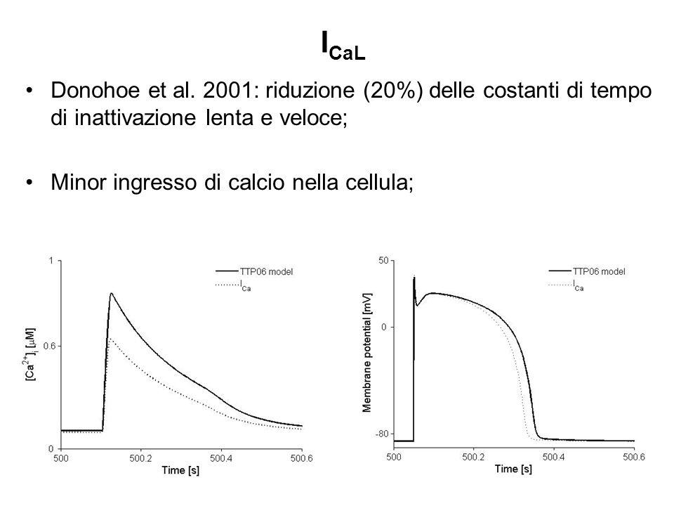 I CaL Donohoe et al. 2001: riduzione (20%) delle costanti di tempo di inattivazione lenta e veloce; Minor ingresso di calcio nella cellula;