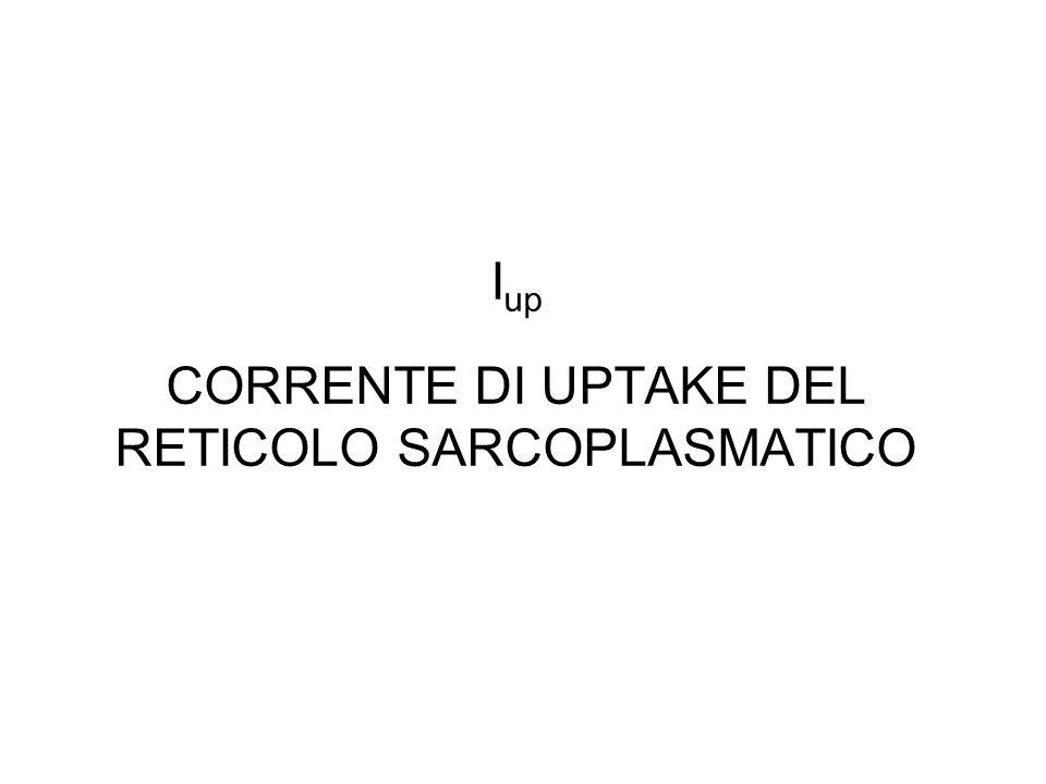 I up CORRENTE DI UPTAKE DEL RETICOLO SARCOPLASMATICO