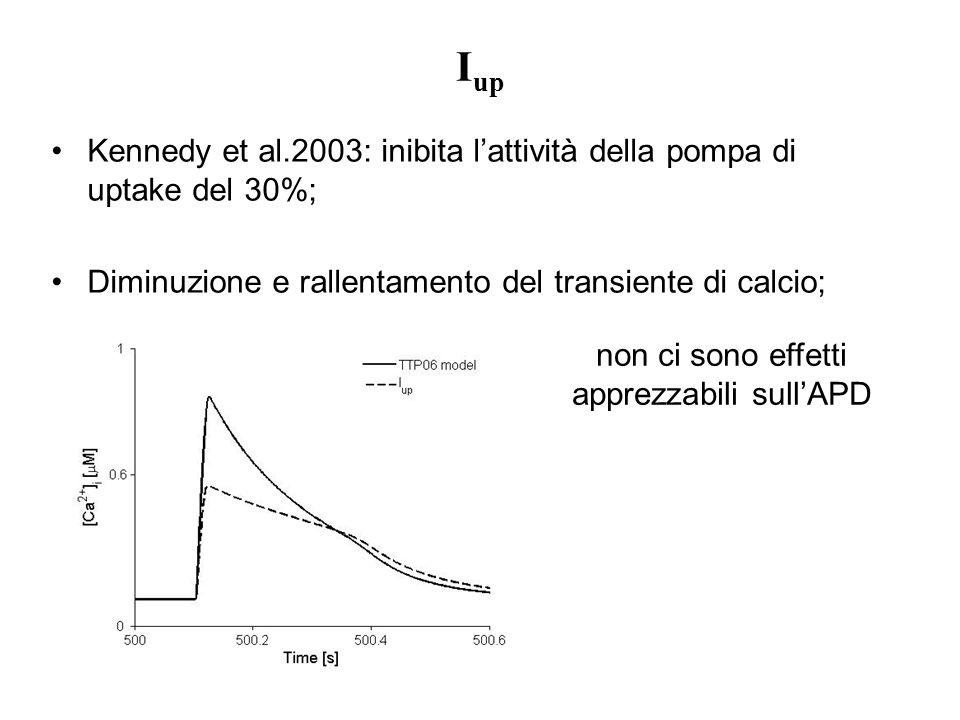 I up Kennedy et al.2003: inibita lattività della pompa di uptake del 30%; Diminuzione e rallentamento del transiente di calcio; non ci sono effetti ap