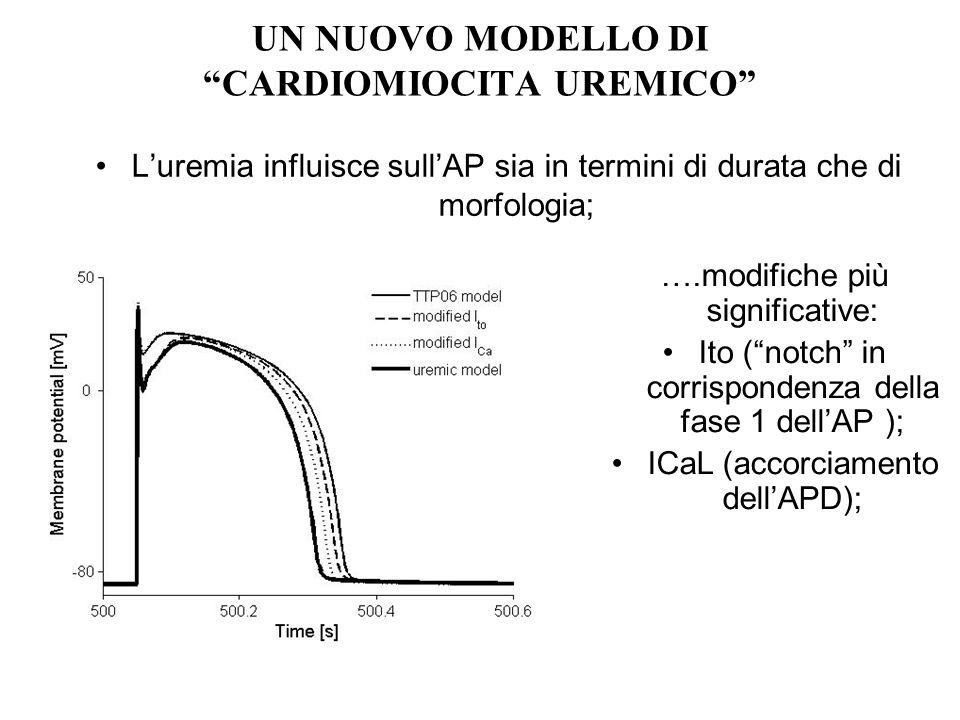 UN NUOVO MODELLO DI CARDIOMIOCITA UREMICO Luremia influisce sullAP sia in termini di durata che di morfologia; ….modifiche più significative: Ito (not