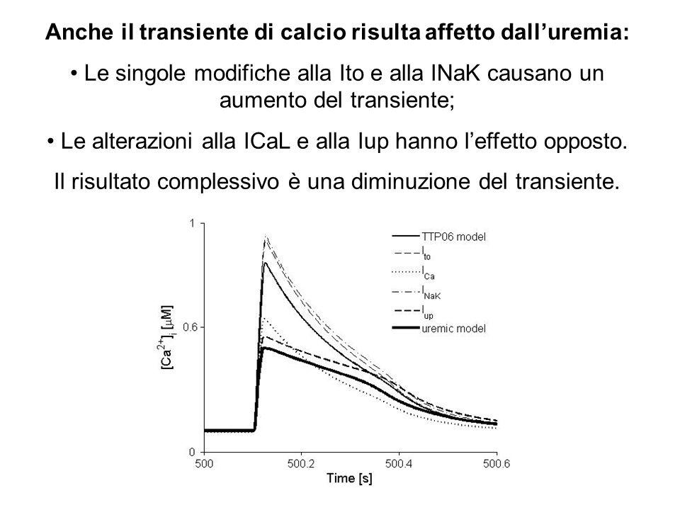 Anche il transiente di calcio risulta affetto dalluremia: Le singole modifiche alla Ito e alla INaK causano un aumento del transiente; Le alterazioni