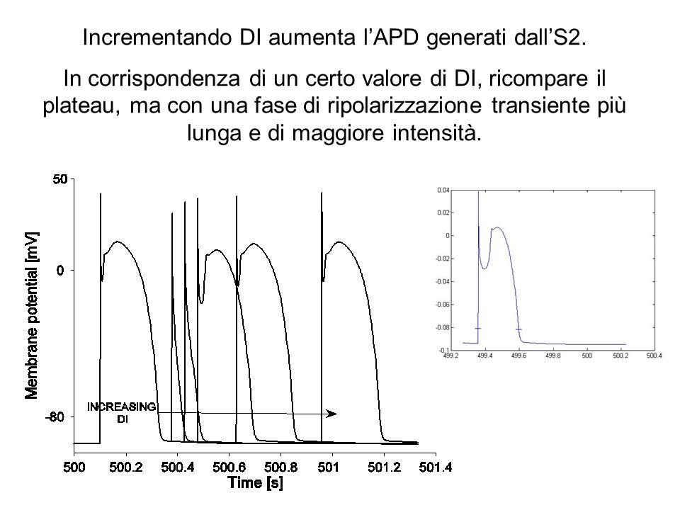 Incrementando DI aumenta lAPD generati dallS2. In corrispondenza di un certo valore di DI, ricompare il plateau, ma con una fase di ripolarizzazione t