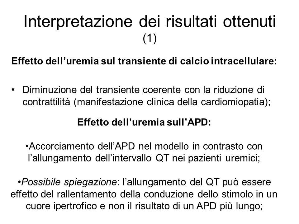 Interpretazione dei risultati ottenuti (1) Effetto delluremia sul transiente di calcio intracellulare: Diminuzione del transiente coerente con la ridu