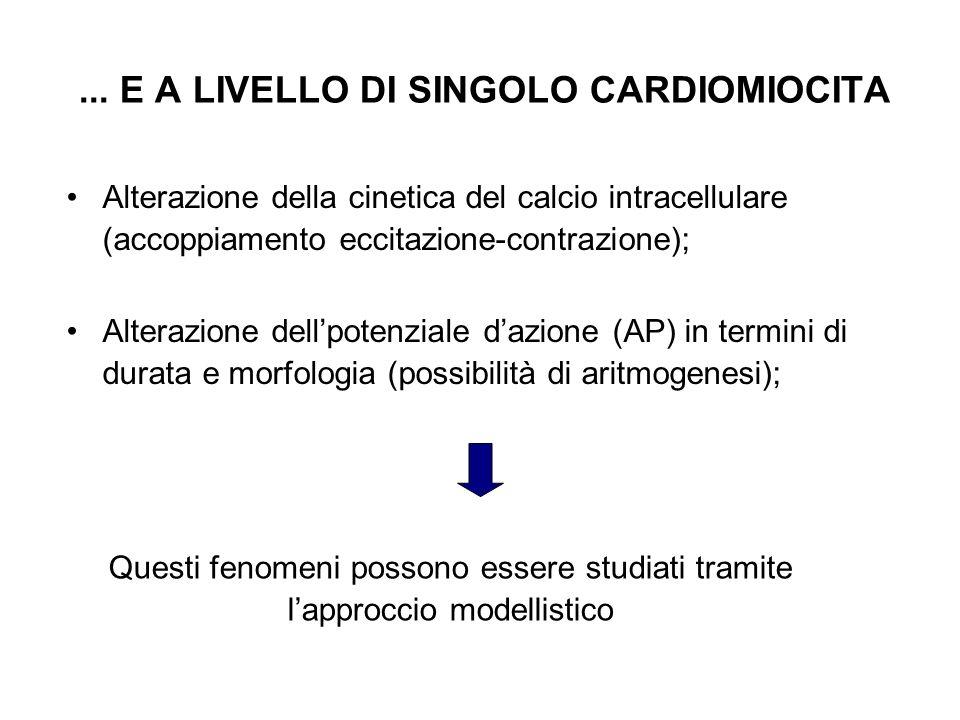... E A LIVELLO DI SINGOLO CARDIOMIOCITA Alterazione della cinetica del calcio intracellulare (accoppiamento eccitazione-contrazione); Alterazione del