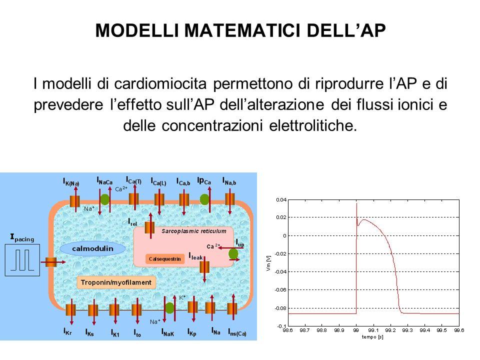 MODELLI MATEMATICI DELLAP I modelli di cardiomiocita permettono di riprodurre lAP e di prevedere leffetto sullAP dellalterazione dei flussi ionici e d