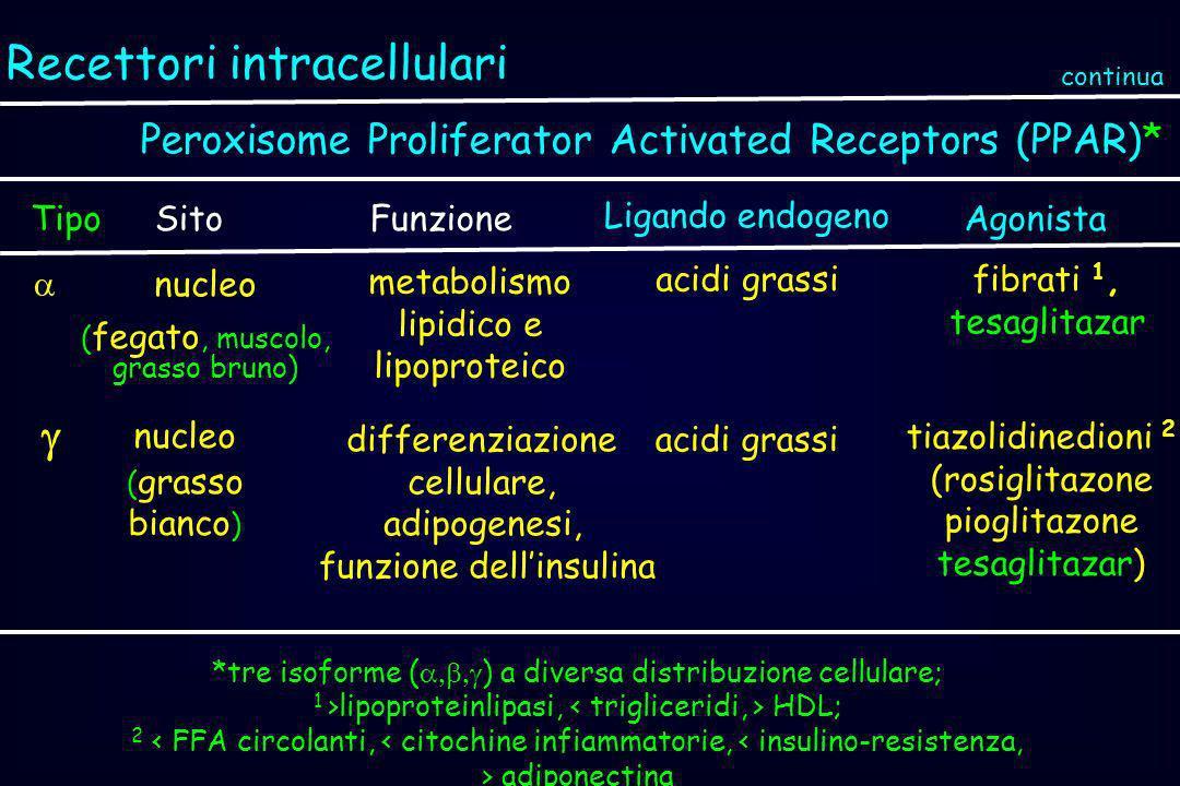 Recettori intracellulari Peroxisome Proliferator Activated Receptors (PPAR)* TipoSitoAgonista nucleo ( grasso bianco ) tiazolidinedioni 2 (rosiglitazo