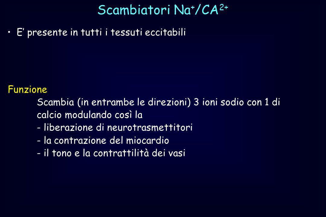 Scambiatori Na + /CA 2+ E presente in tutti i tessuti eccitabili Funzione Scambia (in entrambe le direzioni) 3 ioni sodio con 1 di calcio modulando co