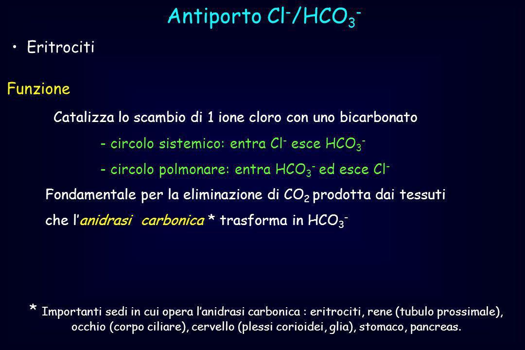 Antiporto Cl - /HCO 3 - Eritrociti Funzione Catalizza lo scambio di 1 ione cloro con uno bicarbonato - circolo sistemico: entra Cl - esce HCO 3 - - ci