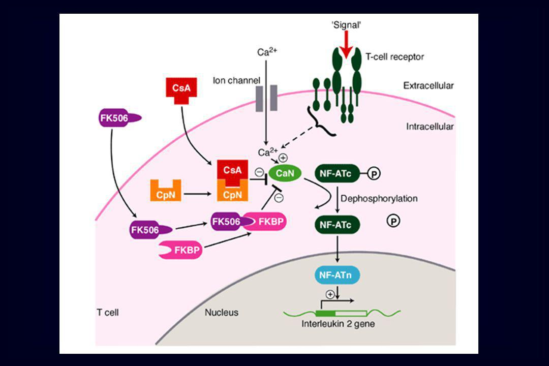IMMUNOSOPPRESSORI Sirolimus / Everolimus – FKPB lega e inibisce attivazione mTOR inibizione varie chinasi inibizione della proliferazione linfociti T in risposta a IL 2 Farmaci che interferiscono con le citochine formano complessi