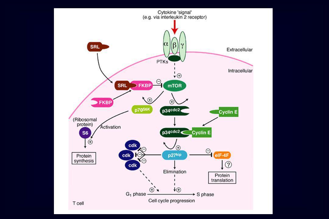 Immunosoppressori Micofenolato ( tramite metabolita attivo acido micofenolico) inosina monofosfato deidrogenasi - sintesi de novo purine proliferazione linfociti T e B Farmaci che interferiscono con le citochine - -