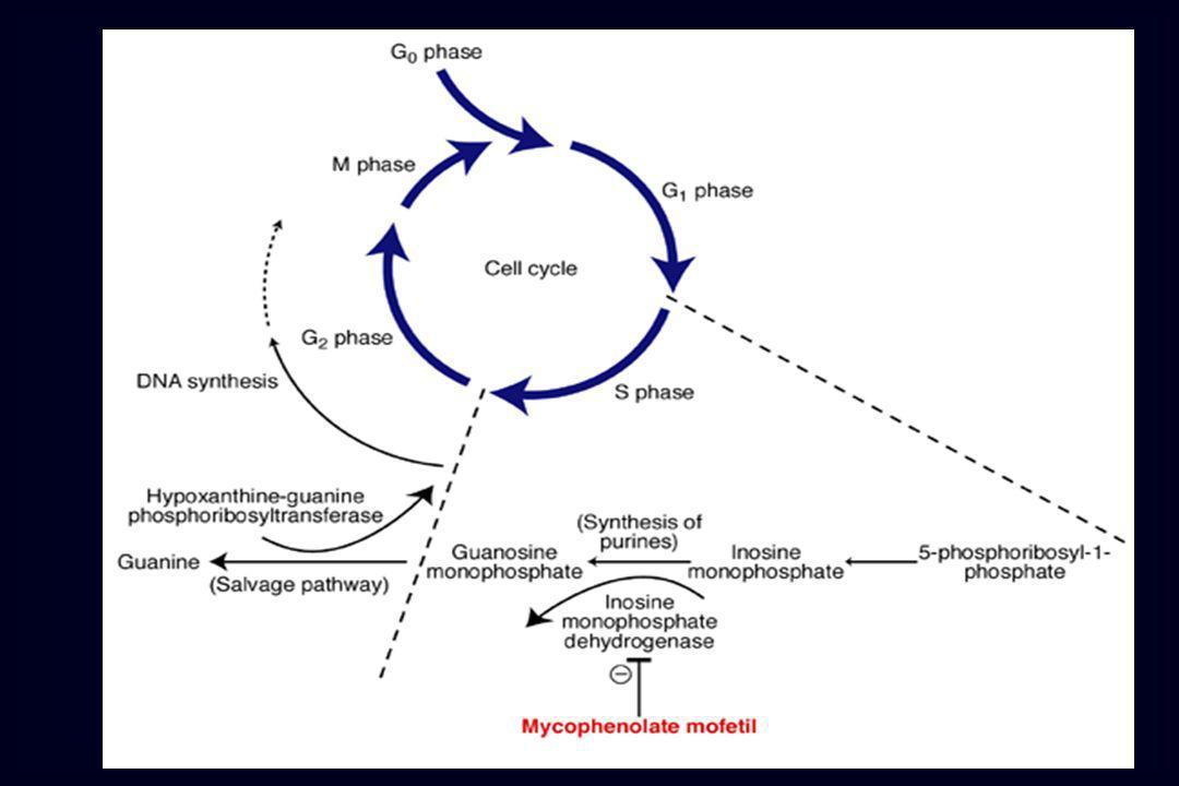 Immunosoppressori Azatioprina (antipurinico) diminuzione della proliferazione dei linfociti T e B Farmaci che interferiscono con le citochine