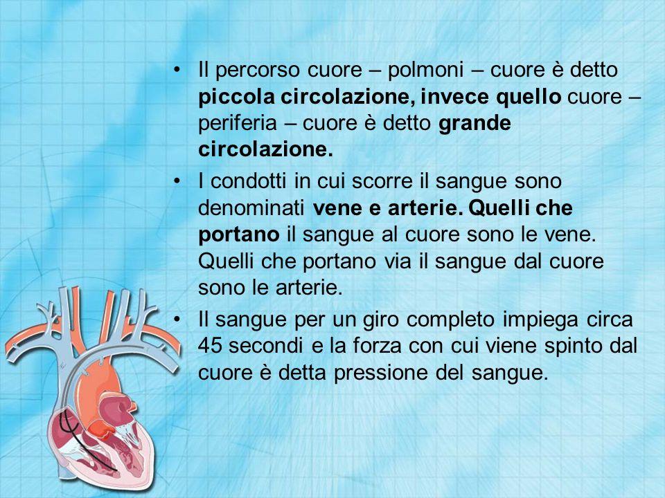 Il percorso cuore – polmoni – cuore è detto piccola circolazione, invece quello cuore – periferia – cuore è detto grande circolazione. I condotti in c