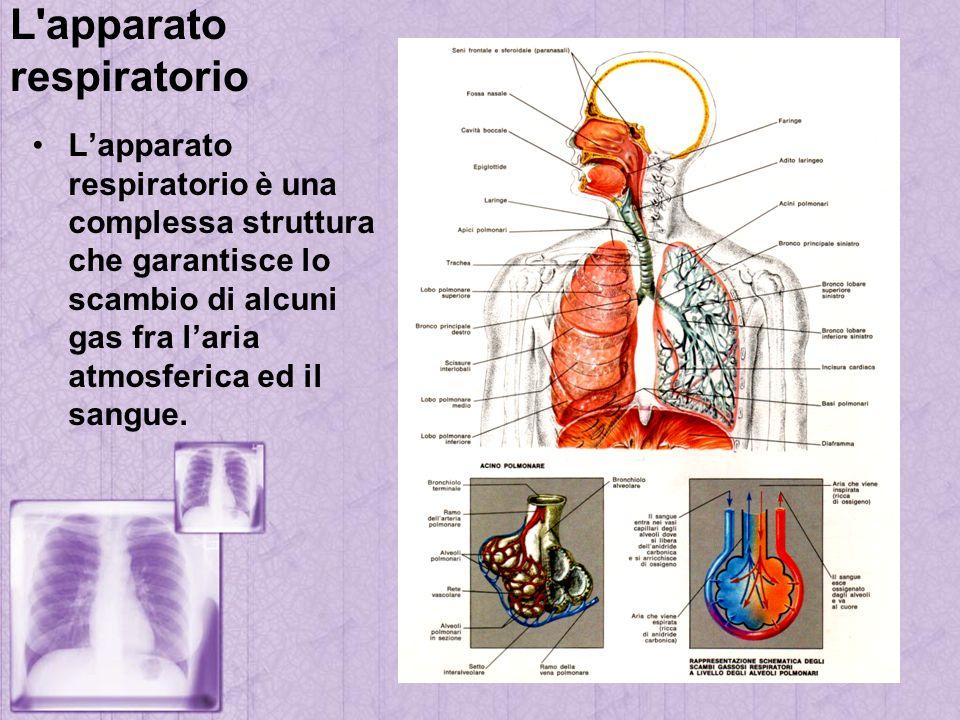 L'apparato respiratorio Lapparato respiratorio è una complessa struttura che garantisce lo scambio di alcuni gas fra laria atmosferica ed il sangue.
