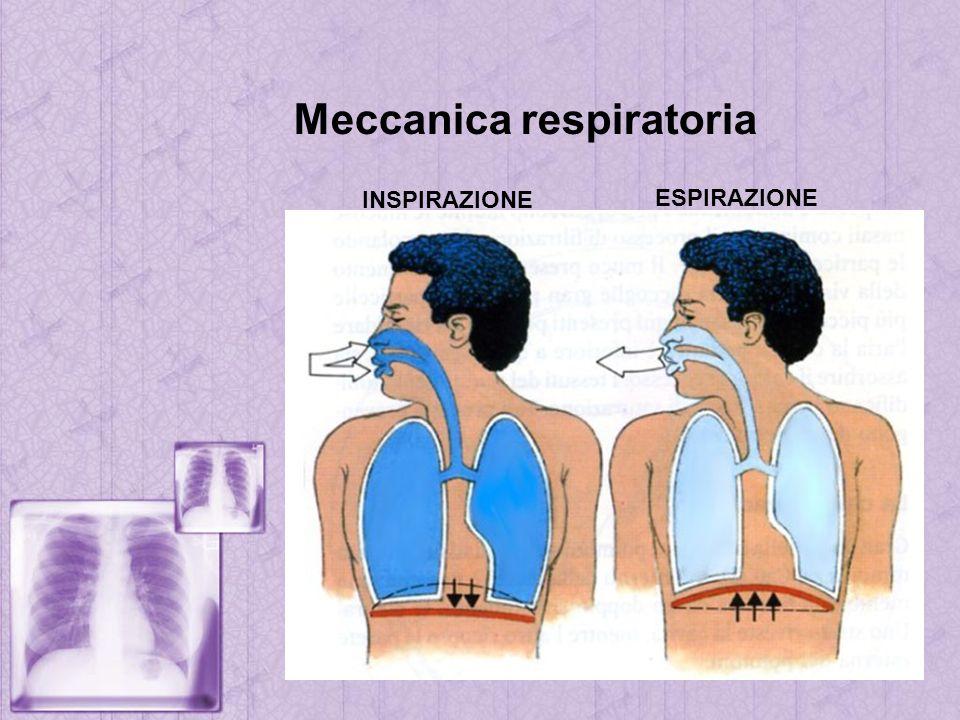 Meccanica respiratoria INSPIRAZIONE ESPIRAZIONE