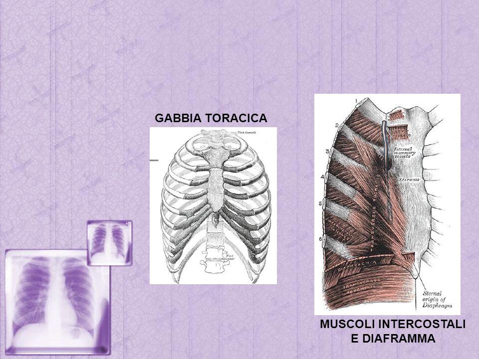 GABBIA TORACICA MUSCOLI INTERCOSTALI E DIAFRAMMA