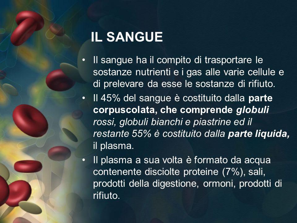 PERMETTONO LIRRORAZIONE SANGUIGNA DELLINTERO ORGANISMO FAVORENDO LO SCAMBIO DI OSSIGENO E DISOSTANZE NUTRITIIVE..