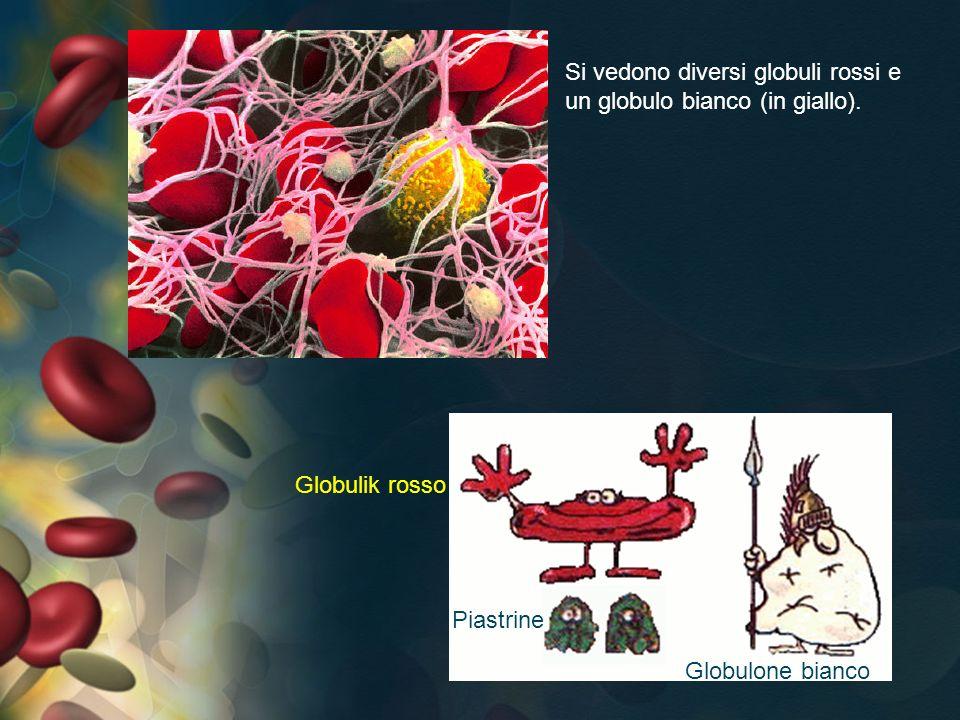 Si vedono diversi globuli rossi e un globulo bianco (in giallo). Globulik rosso Piastrine Globulone bianco