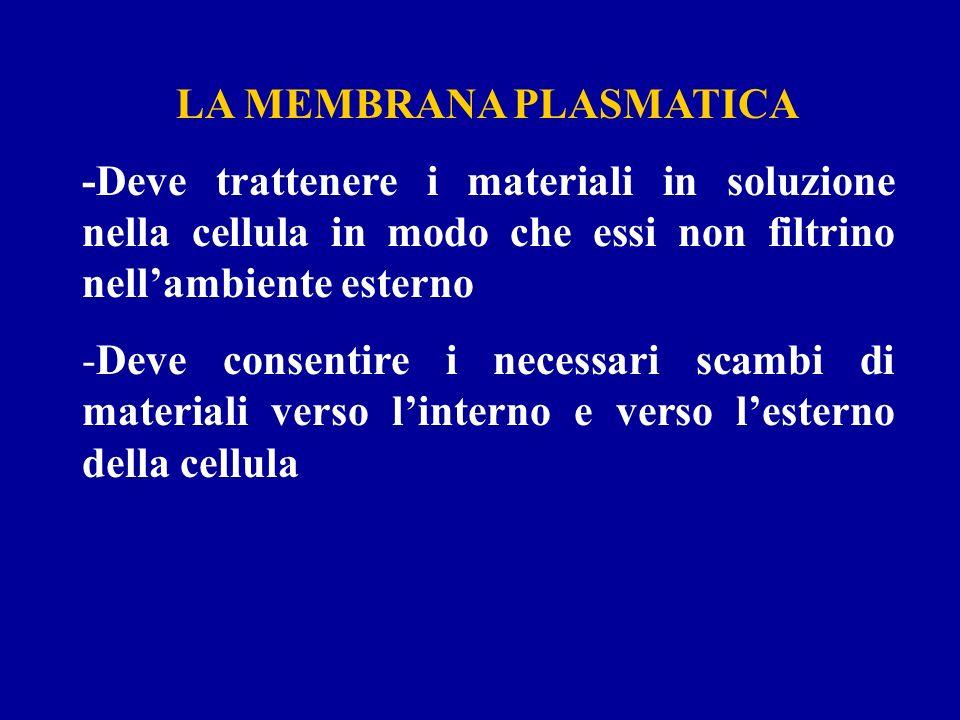 LA MEMBRANA PLASMATICA -Deve trattenere i materiali in soluzione nella cellula in modo che essi non filtrino nellambiente esterno -Deve consentire i n