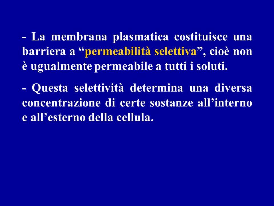 - La membrana plasmatica costituisce una barriera a permeabilità selettiva, cioè non è ugualmente permeabile a tutti i soluti. - Questa selettività de