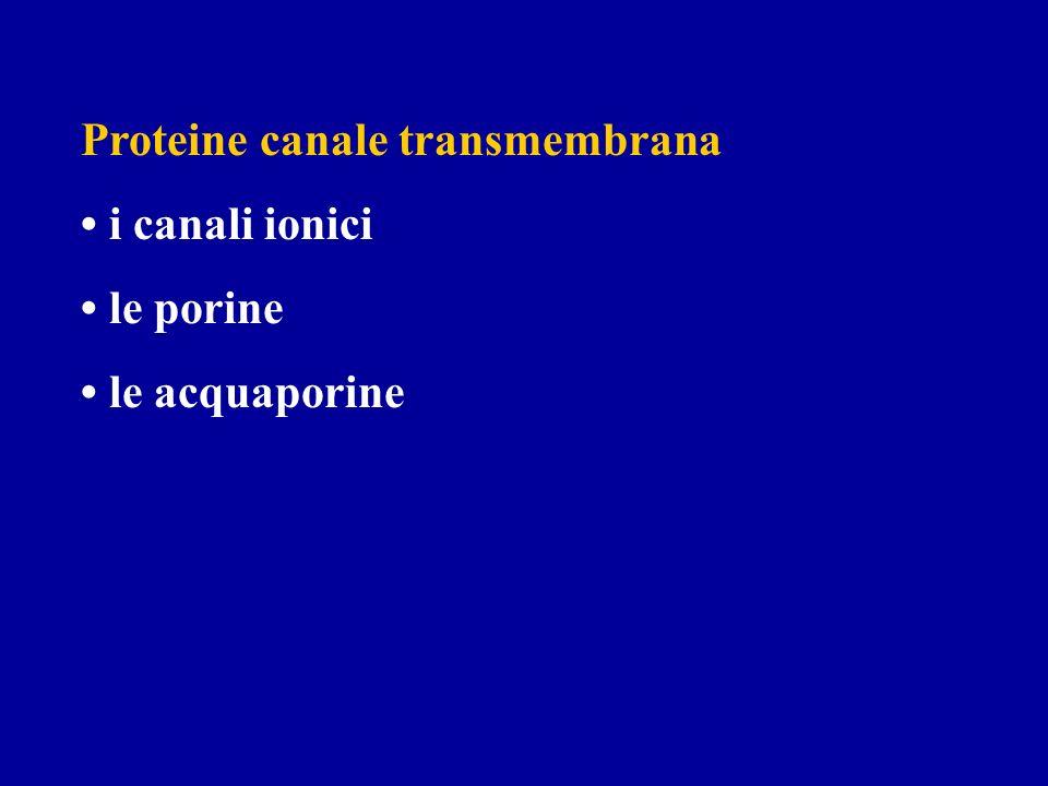 Proteine canale transmembrana i canali ionici le porine le acquaporine