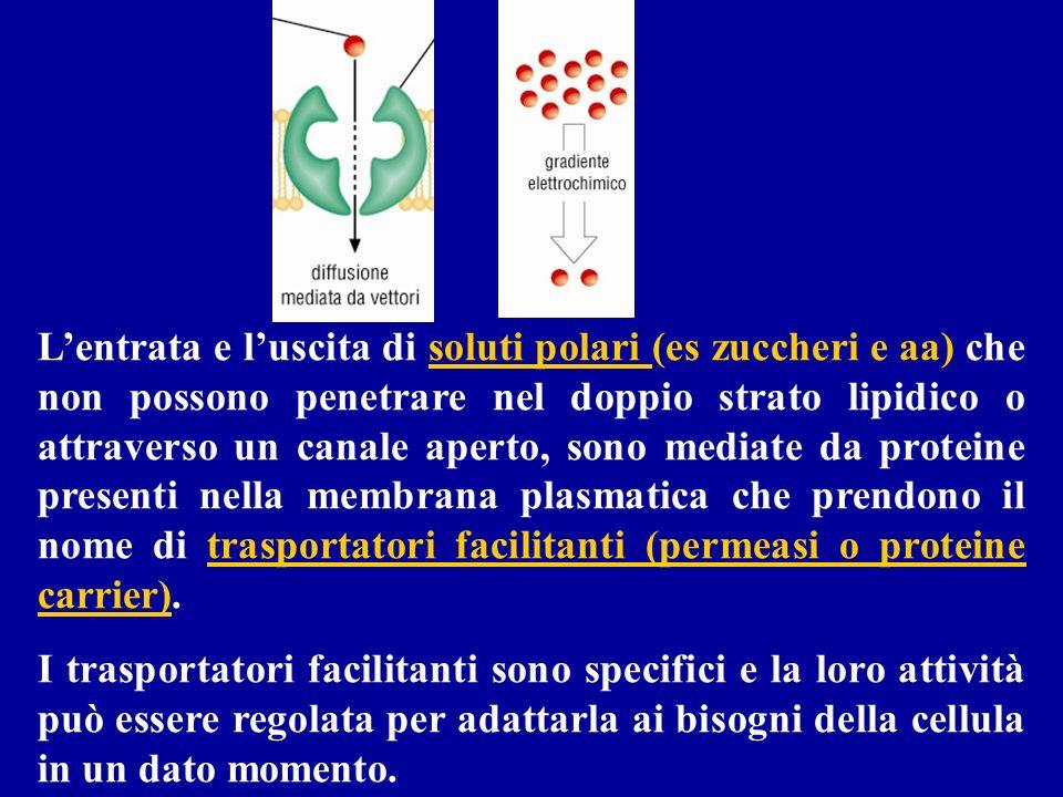 Lentrata e luscita di soluti polari (es zuccheri e aa) che non possono penetrare nel doppio strato lipidico o attraverso un canale aperto, sono mediat