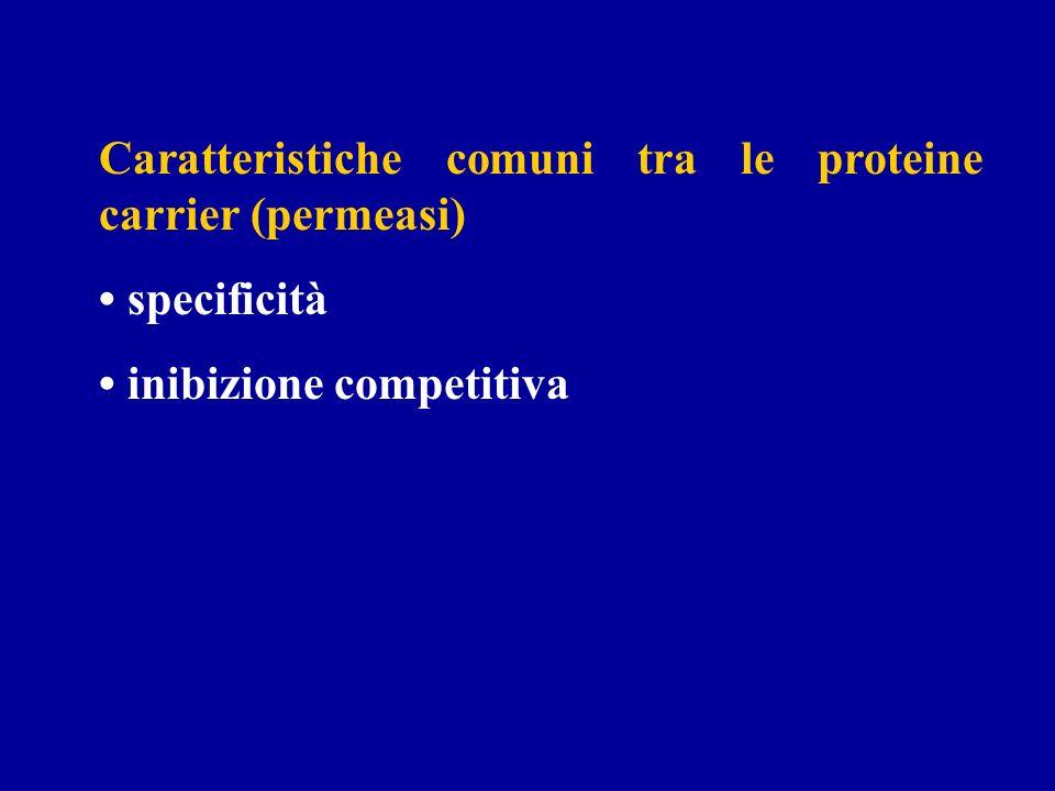 Caratteristiche comuni tra le proteine carrier (permeasi) specificità inibizione competitiva